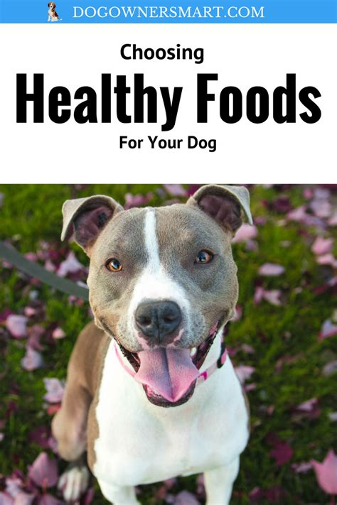 healthy food for puppies choosing healthy foods for your food owners mart