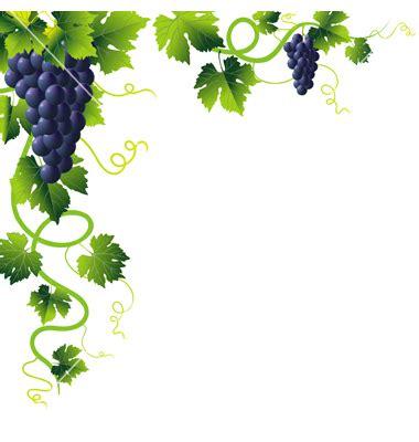 grapevine clip art 15 grape vine clip art free free