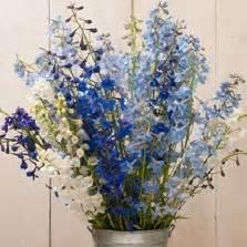 Bibit Benih Biji Jagung Jerry Petersen Blue benih garlic chives bawang kucai