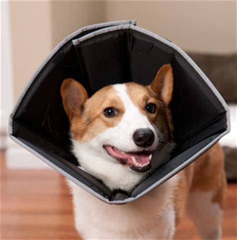 How To Make Cone More Comfortable by 5 More Alternatives To The Dreaded Cone Of Shame