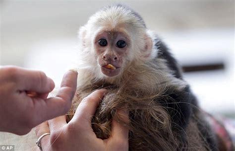justin biebers pet monkey     zoo  singer