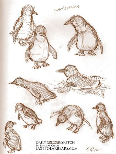 sketchbook recommendation 25 best ideas about animal sketches on animal