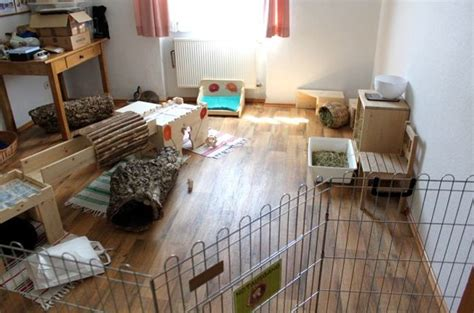 indoor furniture ideas for rabbits bunny approved