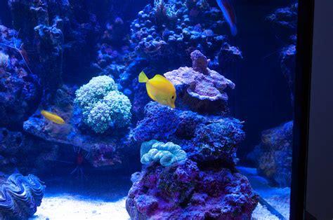 aquascape ottawa rate my reef aquascape reef2reef saltwater and reef