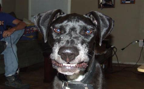 hd  dogs smile wallpaper