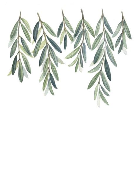 olive branches print olive branch leaves painting