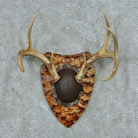 Deer Rack For Sale by Whitetail Deer Antler Plaque Mount For Sale 13773 The