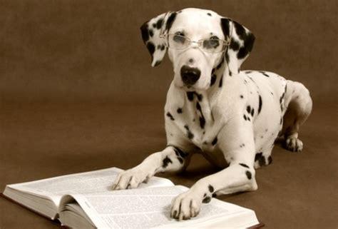 imagenes de burros inteligentes test 191 tu perro es inteligente