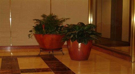 interior plants containers foliage design systems of