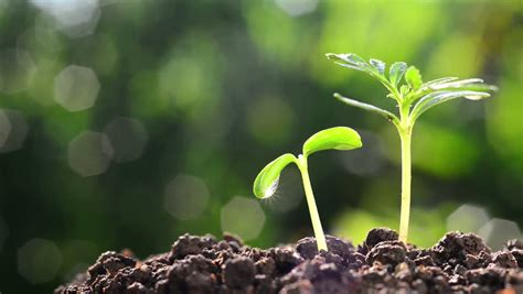 Plants Growing Time Lapse Stock Footage Video 9214634