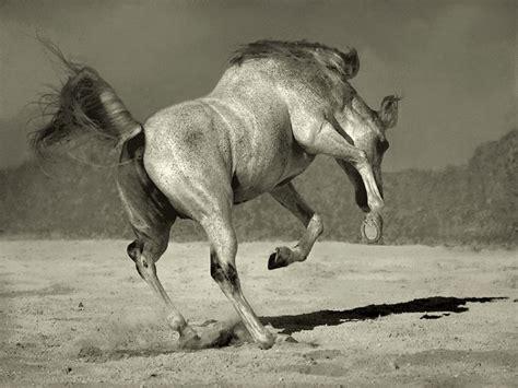 imagenes artisticas de caballos hermosas imagenes de caballos salvajes im 225 genes taringa
