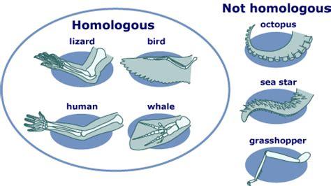 Homologous and analogous coloring