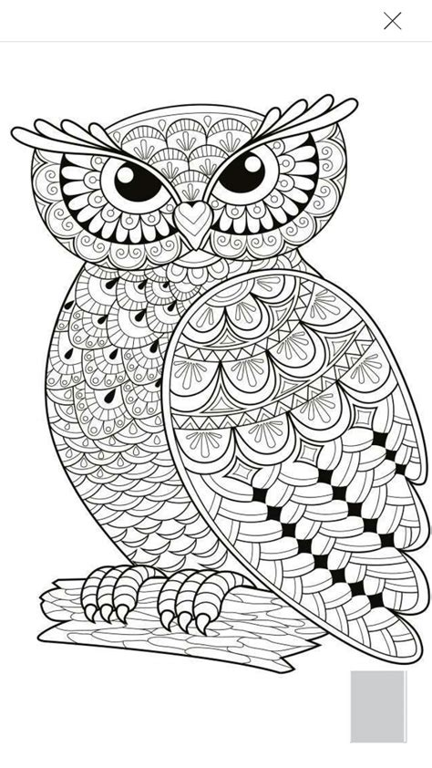 coloring page for adults owl owl coloring page pinteres