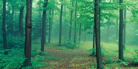 misty forest get biggies