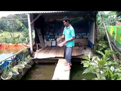 Pakan Ikan Lele Indukan cara memperbanyak telor ikan lele sangkuriang cara merawat
