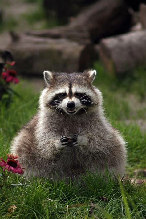 mischievous  animals   plotting  evil  viral