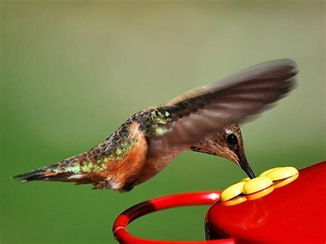hummingbird photos angelic hugs
