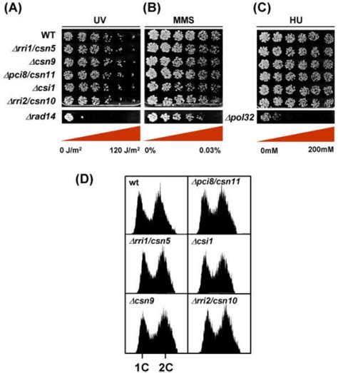 Methan 120 Ml figure 3 conservation of the cop9 signalosome in budding yeast open i