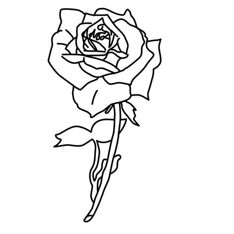 free coloring pages of line drawings of roses
