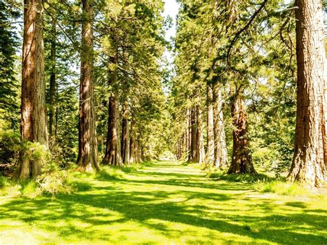 tumblr themes free forest free wallpapers trees nature widescreen nature