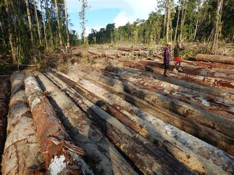 floor     illegal tropical wood