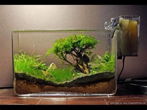 aquascape tutorial bonsai aquarium acquario bonsai step by step vidoemo