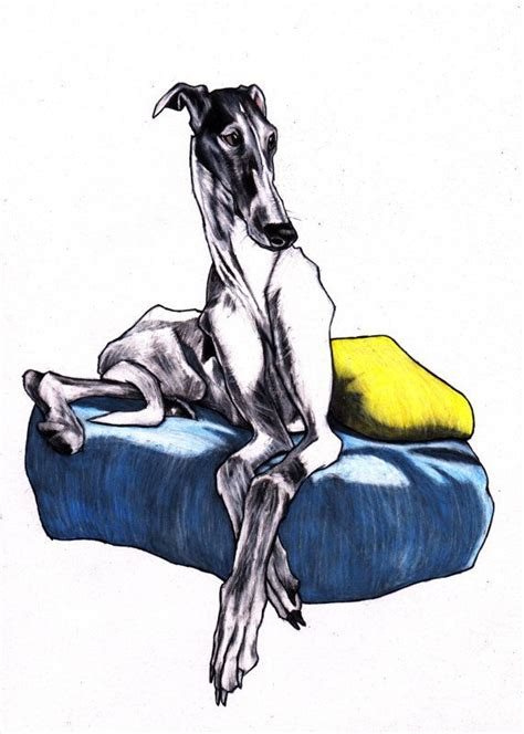 Ridiculously Cool Website Whippet Grey by Best 25 Greyhound Ideas On Greyhounds