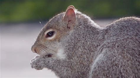 top 28 do squirrels eat bird seed how to keep