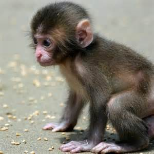 monkey as pet a new exotic fashion fresh design pedia