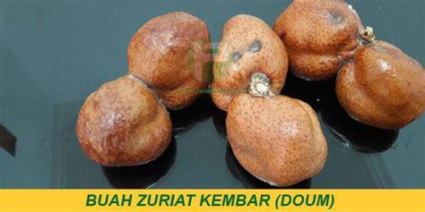Jual Buah Zuriat Mesir Kaskus jual buah zuriat untuk ikhtiar di indonesia