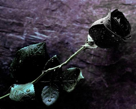 imagenes de flores unicas image gallery imagenes de rosas negras