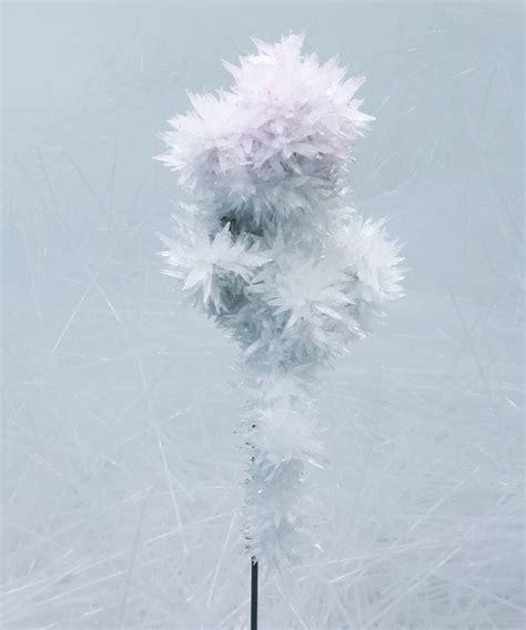 tokujin yoshioka designboom tokujin yoshioka crystallizes swan lake and rose