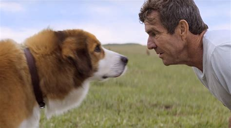the dogs purpose a s purpose review canine cloud atlas is a purposeless flop indiewire