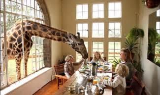 Her Bedroom Window around the world in 80 hotels giraffe manor
