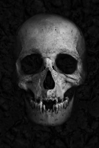 wallpaper skull hd    popular
