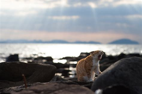 cat island in japan welcome to tashirojima ainoshima japan s amazing cat