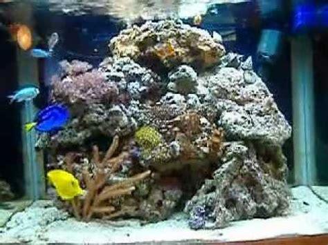aquascape qatar saltwater fish tanks on youtube dave s marine fish tank