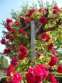 trellis florist garden roses climbing roses trellis flowers