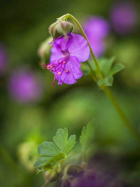 No Sun Plants | power perennials plants that thrive no matter what sun