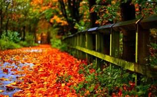hd fall wallpaper