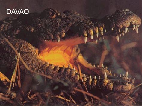 Crocodile Pedro Brown philippines davao