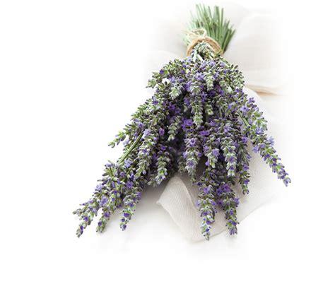Glade Lavender lavender vanilla glade fragrances