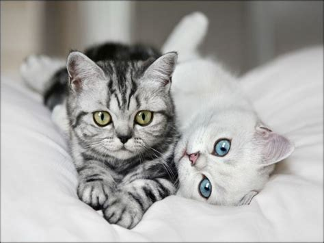 Blee Cat 2