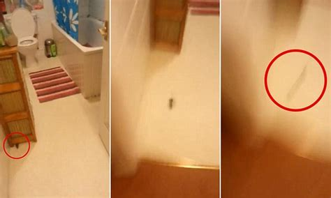mice in bathroom man is terrified when he finds a mouse in his bathroom