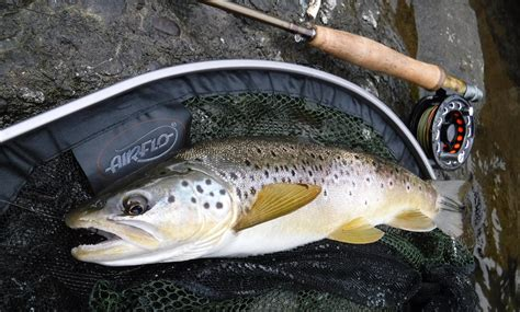 fly fishing tips archives colorado 5 river fly fishing tips for low water conditions