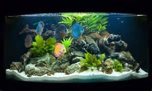 aquarium eau douce tours le mans orl 233 ans