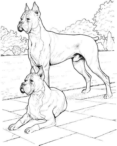 coloring book pages dog breeds free realistic dog coloring pages