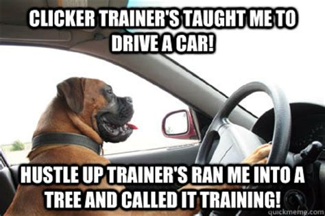 Dog Driving Meme - i have no idea what i m doing dog driving quickmeme