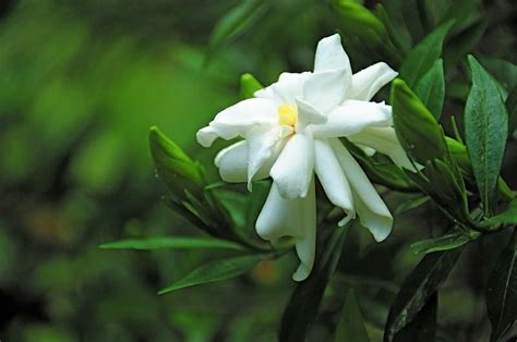 fragrant plants list