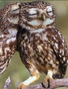 owl lovers owls from bing com homepage today awe pinterest